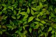 綺麗な緑の葉 Beautiful green leaves