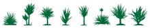 Yucca Icon In Different Style Vector Illustration. Yucca Icon Vector On White Background, Yucca Trendy Filled Icons From Nature Collection, Yucca Vector Illustration.