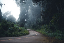 The Road Into The Forest Was Foggy In The Morning.
