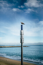 A Seagull On A Lamp Post
