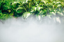 Green Leaves Of Water Plant And Fog, Abstract Nature Environment Background