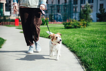 Woman With Jack Russell Terrier Walking At Park