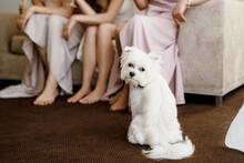 White Terrier Next To A Man