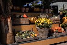 Autumn Everyday Flowers Stand With Variety Of Pumpkins, Chrysanthemums, Calluna Vulgaris, Bouquets Of Dried Spikelets For Home And Garden Decoration Outdoor Of Greek Flower Garden Shop.