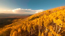 Soaring Over Golden Aspens On A Mountainside At Sunset. FPV Drone Flying