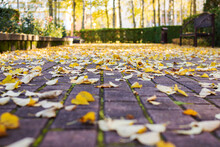 Yellow Autumn Leaves On Paving Slabs In Park