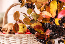 White Wicker Basket Full Of Apples, Pumpkin, Cones And Colorful Branches With Aronia Berries And Leaves