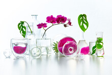 Natural Laboratory. Abstract Floral Arrangement With Magenta Orchid Flowers And Exotic Monstera Leaves In Transparent Glass Vases, Jars, Vials. Reflections, Floral Elements Distorted In Water.