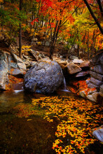 Breathtaking Shot Of A River In A Forest Full Of Colorful Leaves In Autumn In Korea