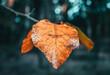 Liść jesienią