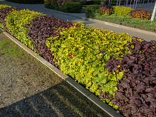 Park Design: Two-tone Hedge. Hedge: Green And Purple Bushes.
