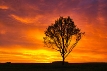 Lonely Tree Stormy Red Sky At Sunset