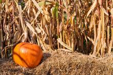 Still Life Harvest Decoration For Thanksgiving