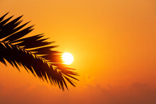 Iew On Sunrise Through Silhouette Of Palm Tree Leaf