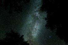 Milchstraße Durch Baumkronen