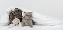 German Boxer Puppy Licks Tiny Kitten Lying Together Under Warm Blanket On A Bed At Home And Looking At Camera. Empty Space For Text