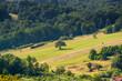 Pola ziemia uprawna latem w otoczeniu lasów panorama