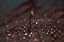 Verregneter Oktobertag, Regentropfen Auf Herbstblatt, Close Up, Türkis/braun Touch