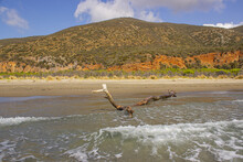 Seascape Of The Tuscan Maremma. Collelungo Beach Seen From The Sea. Waves Of The Sea, A Trunk, Dark Sand And The Hills Of Red Earth Covered With Vegetation.