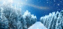 Snowy Winter Forest With Pine Trees And Snow During Night. Christmas Card Or Winter Landscape Background