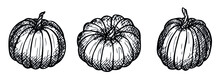 Vector Hand Drawing Set Of Pumpkin. Isolated Object On White Background. Vegetable Harvest Illustration. Detailed Vegetarian Food Sketch. Farm Market Product. Elements For Autumn Design, Decoration.
