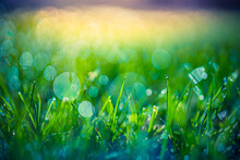 Beautiful Close Up Ecology Nature Landscape With Meadow. Abstract Green Grass And Sunlight Background. Artistic Bokeh Forest Field With Warm Sunset Light, Relax Nature