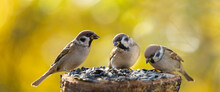Group Of Sparrows Sitting On Bird Feeder