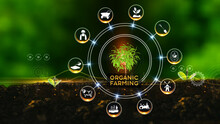 Organic Farming Concept. Green Environment With Center And Spoke Concept ,Plant On Center And Rotating Icons