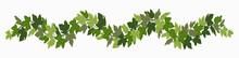 Ivy Festoon, Green Creeper Decorative Border Isolated On White Background. Vector Illustration In Flat Cartoon Style
