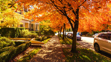 Well-treed Sidewalk Provides Leafy Shade And Fall Colors At Univercity Highlands Residential Community On Burnaby Mountain Near Simon Fraser University.