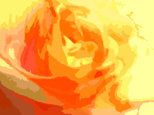 Orange Rose Background For Invitation Cards Or Textile. Beautiful Orange-yellow Rose Background For Wallpaper, Valentines, Scrapbooking,  Background And Texture, Prints, Posters, Fabric Products, Etc.