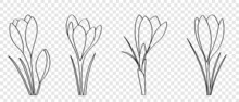 Crocuses Are Drawn With Black Line In Doodle Style, Flat Vector Cartoon. Set Of Spring Flowers With An Outline For The Design Of Cards And Flyers.