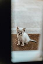 Kitten Sitting On Floor Mat In Front Of Entrance Door