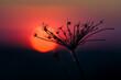Kwiat o zachodzie słońca, tło czerwone.