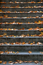 Germany, Stone Steps Covered In Fallen Autumn Leaves