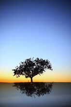 Silhouette And Reflection Of Pine Tree At Sunrise