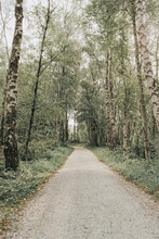 Netherlands, Schiermonnikoog, Path Through The Forest
