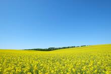 Germany, Mecklenburg-Western Pomerania, Rugen, Flowering Rape Field