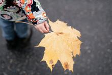 Little Girl's Hand Holding Autumn Leaf