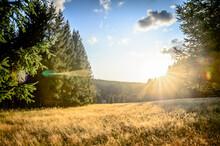 Field At Forest Edge In Sunshine, Harz, Braunlage, Germany