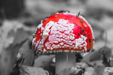 An Inedible Mushroom In The Forest.