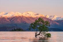 New Zealand, Otago, LakeÔøΩWanakaÔøΩandÔøΩWanakaÔøΩTree At Dawn With Snowcapped Mountains In Background