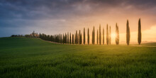 Italy, Tuscany, Panorama Of Grassy Meadow And Treelined Rural Road At Sunset