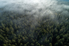 Germany, Baden-Wurttemberg, Drone View Of Autumn Forest Shrouded In Morning Fog