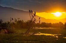 Flock Of Cormorants Perching On Trees Growing On Shore Of Lake Kerkini At Sunrise, Macedonia, Greece