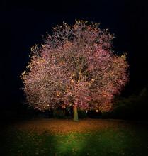 Lone Autumn Tree At Night
