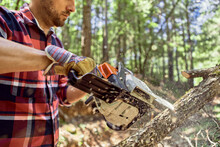Lumberjack Cutting Branch With Chainsaw In Forest