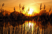 Germany, Bavaria, Silhouettes Of Reeds Growing In Pond At Sunset