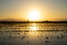 Idyllic Sunset Over Rice Paddies In Ebro Delta