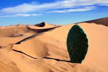 Morocco, Sahara, Merzouga, Erg Chebbi, Cactus Leaf In Desert Dune